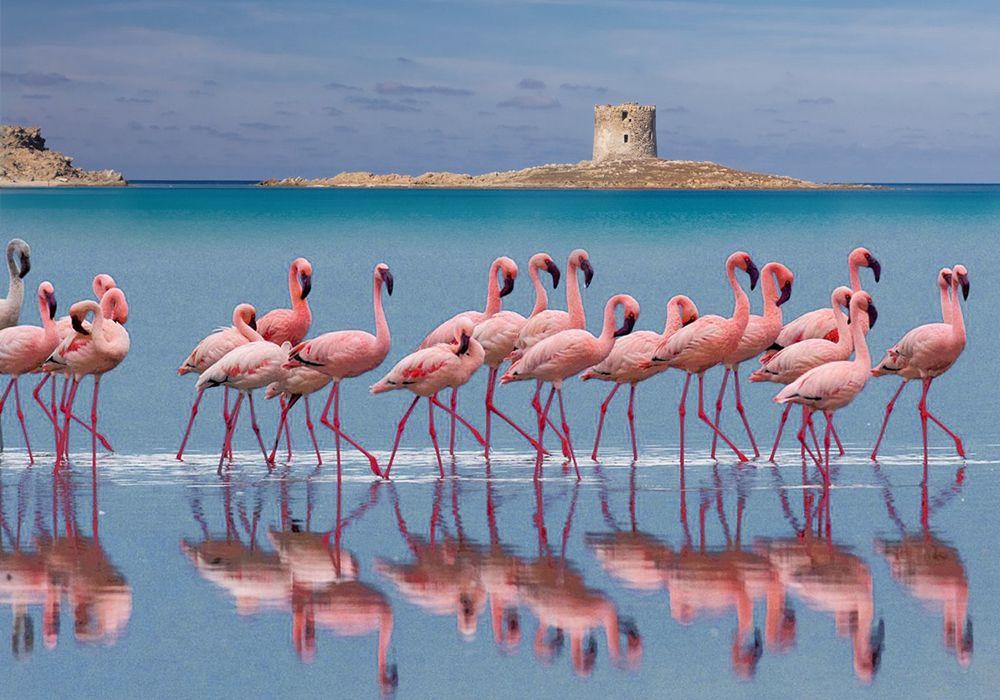 Сардиния и розовые фламинго